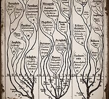 Tree Chart Plantae Protista and Animali by diane  addis