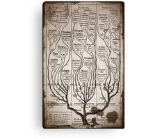Tree Chart Plantae Protista and Animali Canvas Print
