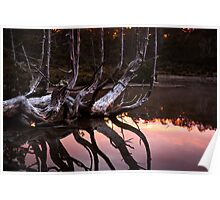 One tree many branches Poster