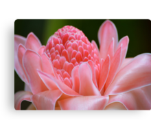 Tropical Gardens 7 - pink ginger torch lily Canvas Print
