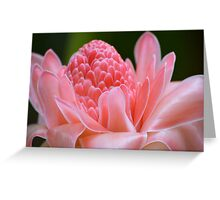 Tropical Gardens 7 - pink ginger torch lily Greeting Card