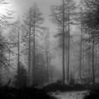 The Misty Woods by EvilTwin