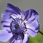 Blue Vision by Sally Haldane