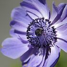 Blue Vision 2 by Sally Haldane