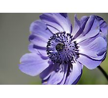 Blue Vision 2 Photographic Print