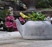 Tin Pot by stellaclay
