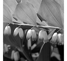 White Bells Flower Photographic Print