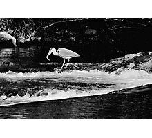 The Heron Strikes, River Barrow, Graiguenamanagh, County Kilkenny Photographic Print