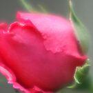 FLOWER FANTASY by Lorelle Gromus