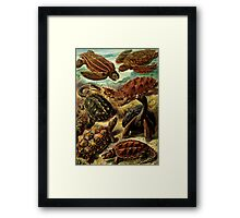 Land and Sea Turtles Framed Print