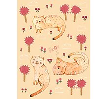 Orange Cat Pattern Photographic Print