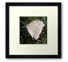 Self Propelled Flowers ~ Part Twelve Framed Print