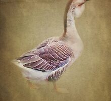 Goosey Goosey Gander by Catherine Hamilton-Veal  ©