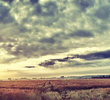 Sunrise Field by Cr4zy