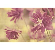 Hint of purple Photographic Print