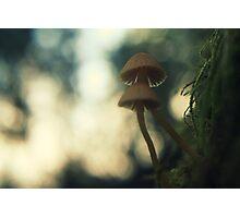 Turning stumps into mushroom factories Photographic Print