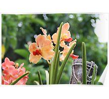 Orchid garden Poster
