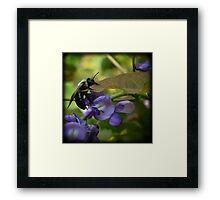 A Bee climbing onto a Leaf Framed Print