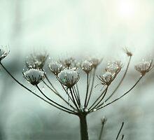 Winter contre-jour by David Tait