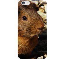 guinea pig iphone cover iPhone Case/Skin