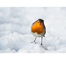 Robin in the snow(Erithacus rubecula) Photographic Print