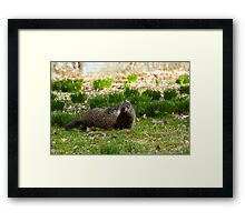 Groundhog Love Framed Print