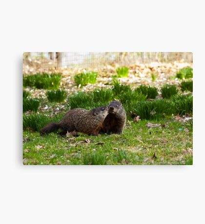 Groundhog Love Canvas Print