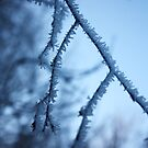 Tiny Icicles by Mounty