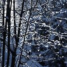 2012 - winterwald by moyo