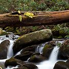 Staire Creek by Forrest Tainio