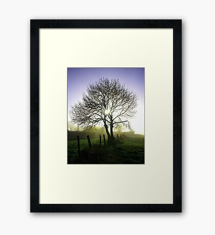 Tall tree in Ireland Framed Print