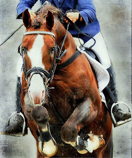 The show jumper by Alan Mattison