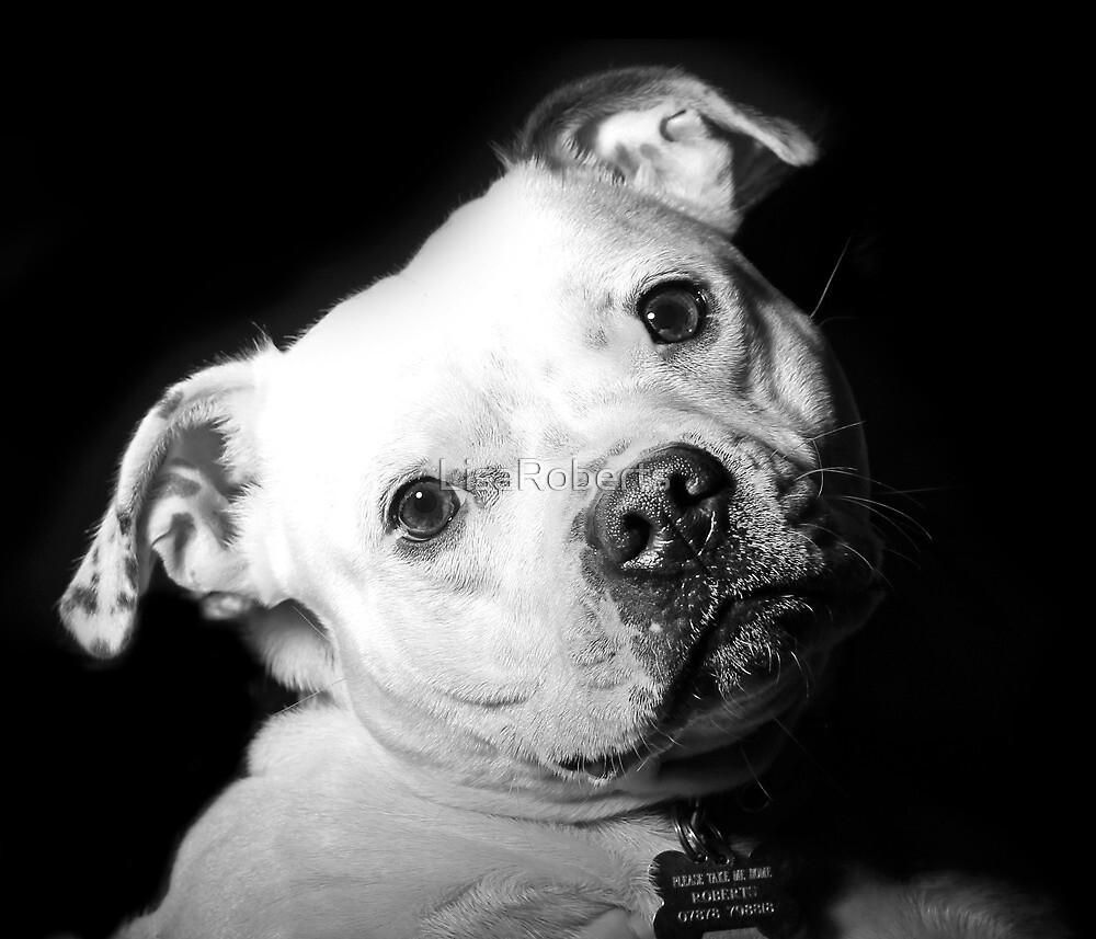 Millie in the spotlight by LisaRoberts
