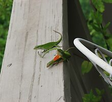 Anoles-Loverboy Are You Cheating On Me? A Human Response by JeffeeArt4u