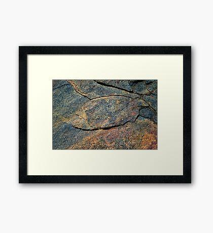The Fish  Framed Print