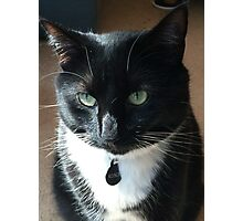 Rosco - the rescue kitty Photographic Print