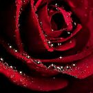 RED...RED...ROSE by RoseMarie747