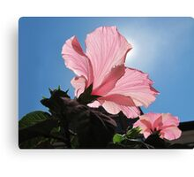 Basking in the Sunlight ~ Pink Hibiscus Flower under Blue Skies on a Sunny Day Canvas Print