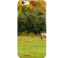 Horses Enjoying a Beautiful Autumn Day iPhone Case/Skin
