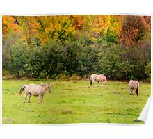 Horses Enjoying a Beautiful Autumn Day Poster