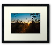 Grass Tree Sunset Framed Print