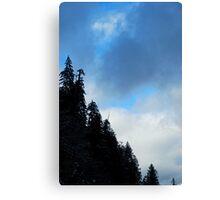 Washington Pines Canvas Print