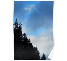 Washington Pines Poster