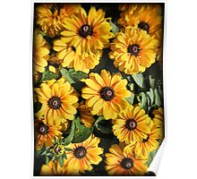 Abundance ~ Yellow Coneflowers / Black-eyed Susans against a Textured Background ~ Vintage Photography Poster