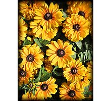 Abundance ~ Yellow Coneflowers / Black-eyed Susans against a Textured Background ~ Vintage Photography Photographic Print