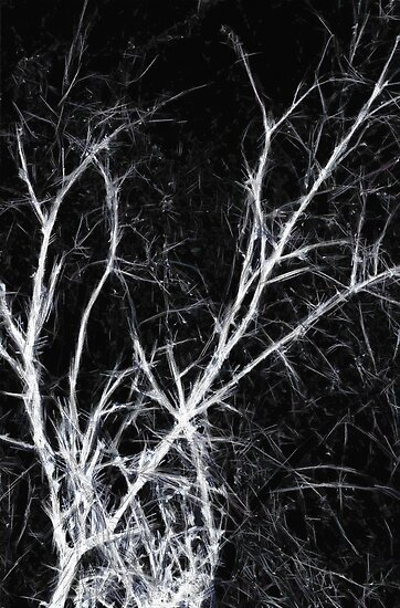 The Dark Naked Presence of Trees in Winter by StudioDestruct