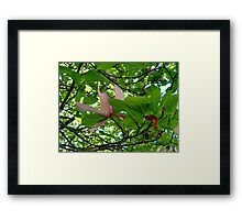 Surrounded By Magnolia Leaves Framed Print