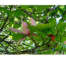 Surrounded By Magnolia Leaves Photographic Print