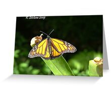 Butterfly in harmony Greeting Card
