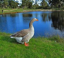 Goose by Geoffrey Higges